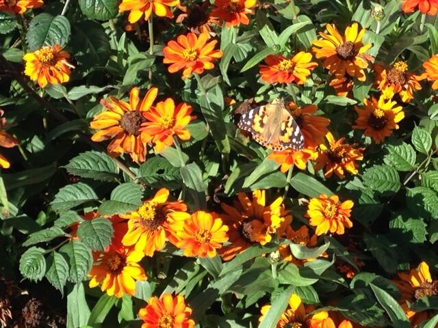 Flowers_butterfly